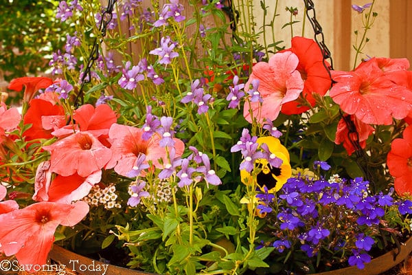 Flower Garden - Front Basket Welcome (1 of 1)