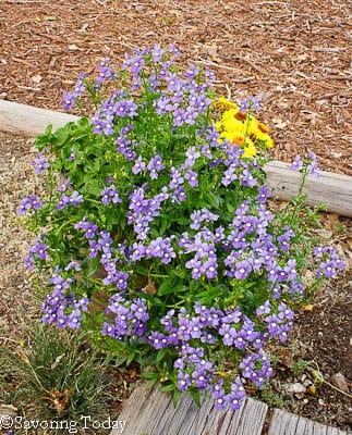 Flower Garden --Little Purple Flowers (1 of 1)