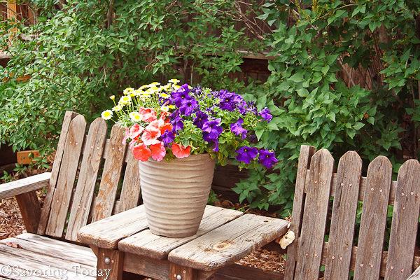Flower Garden -- Purple Pentunias 2 (1 of 1)