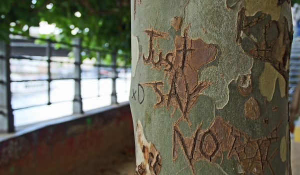 Just Say No carved into the bark on a tree.